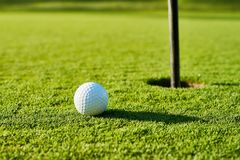 Golf ball on the green. Stock Images