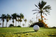 Golf ball on green grass, palm trees background. Close-up view Stock Photo