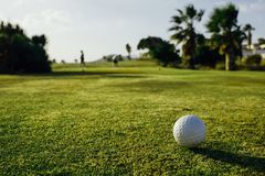 Golf ball on green grass, palm trees background. Close-up view Royalty Free Stock Photos