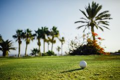 Golf ball on green grass, palm trees background. Close-up view Stock Image