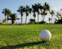 Golf ball on green grass, palm trees background. Close-up view Royalty Free Stock Image