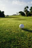 Golf ball on green grass, palm trees background. Closeup view Stock Image