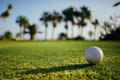 Golf ball on green grass, palm trees background Royalty Free Stock Images