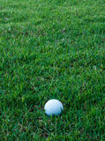 Golf ball on green grass Royalty Free Stock Photo