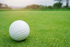 Golf ball on green grass ready to be shot at golf court.  stock photo