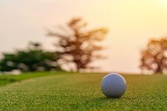 Golf ball on green grass ready to be shot at golf court.  royalty free stock photo