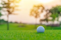 Golf ball on green grass ready to be shot at golf court.  royalty free stock images