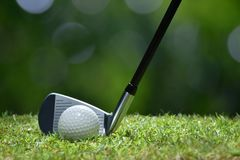 Golf ball on green grass ready to be struck on golf course Royalty Free Stock Images