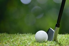 Golf ball on green grass ready to be struck on golf course Royalty Free Stock Photos
