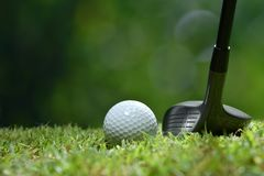 Golf ball on green grass ready to be struck on golf course Stock Images