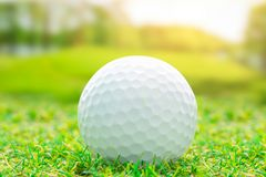 Golf ball on green grass sport royalty free stock images