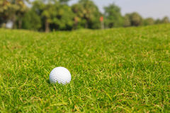 Golf ball on green grass. Golf ball on sports golf course and hole Stock Images