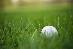 Golf ball on green grass. White Golf ball on green grass Stock Images