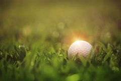 Golf ball is on a green lawn in a beautiful golf course. With morning sunshine.Ready for golf in the first short.Sports that people around the world play during royalty free stock image