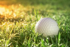 Golf ball is on a green lawn in a beautiful golf course. With morning sunshine.Ready for golf in the first short.Sports that people around the world play during royalty free stock photo