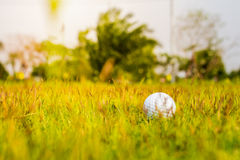Golf ball on the green. Royalty Free Stock Photo