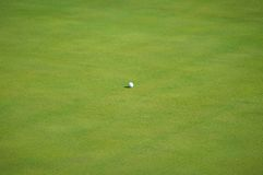 Golf Ball on Green Stock Photography