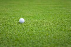 Golf ball on green. Golf ball sitting on a golf course putting green Stock Photos