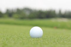 Golf ball on a green. In a sunny day Stock Photography