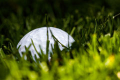 Golf ball hiding Stock Images