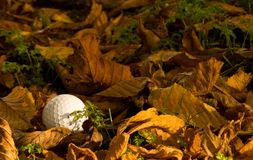 Golf ball lost in the rough. Hidden in leaves and tree shadow Stock Images
