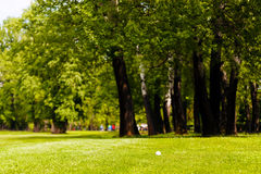 golf ball near the forest royalty free stock photography