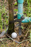Golf ball near the tab water pipe. Close up dirty Golf ball near the tab water pipe Stock Photography
