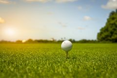 The golf ball put on green grass of golf course. Golf ball put on green grass at golf course in competition Stock Photos