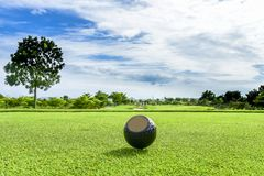 The golf ball put on green grass of golf course. Golf ball put on green grass at golf course in competition Royalty Free Stock Images