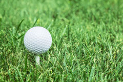 Golf ball ready to be hit on the grass. Royalty Free Stock Photography