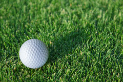 Golf ball ready to be hit on a green grass. Royalty Free Stock Image