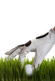 Golf ball retrieval. A golfer retrieves a golf ball from the long grass on white Stock Images