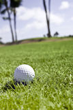 Golf ball in the rough Stock Photos