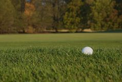 Golf ball in the rough. A golf ball sits in the rough Stock Image