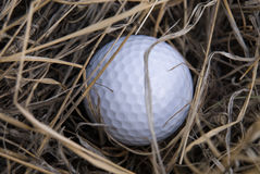 Golf ball in the rough. (brown weeds Stock Image