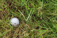Golf ball in rough. Close up dirty golf ball in rough Royalty Free Stock Image