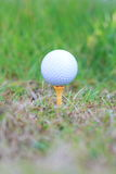 Golf ball on rough Royalty Free Stock Photos