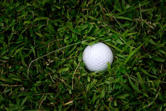 Golf ball in rough grass Stock Images