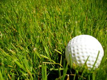 Golf ball in the ruff. A golf ball hit into the ruff Stock Image