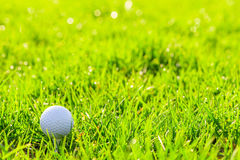 Golf ball on a stand in the green grass Stock Image