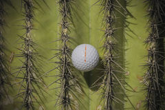 Golf ball stuck in Saguaro Cactus Tree Stock Photography