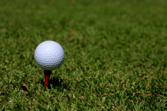 Golf ball on a tee. A close-up shot of a golf ball balanced on a tee. The tee has been placed on the green, with green blades of grass all around it Royalty Free Stock Photography