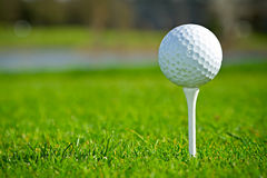 Golf ball on the tee close up. Golf ball on sunny golf course Royalty Free Stock Photos