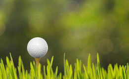 Golf. Ball with tee on green grass Royalty Free Stock Photos
