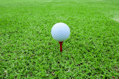 Golf ball on a tee in green grass course Royalty Free Stock Image