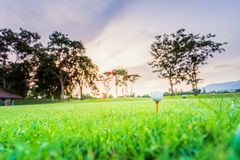 Golf ball on tee at tee off with blur green grass foreground and blur colorful sky with silhouette trees background during sunrise. Golf ball on tee at 1st hole stock photography