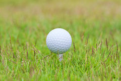 Golf ball. On tee over a blurred green Royalty Free Stock Photography