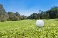 Golf ball on a tee. A golf ball on a tee at the start of a hole royalty free stock image