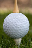 Golf ball between tees Stock Image