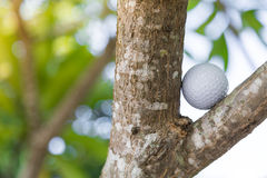Golf ball in tree Stock Photography